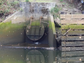 Duwamish River bank