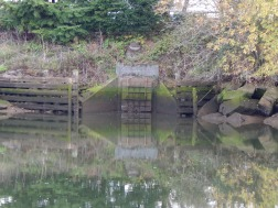 Duwamish River bank