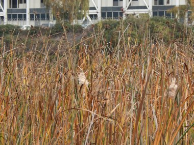 Marsh Grass and Boeing - Turning basin 3