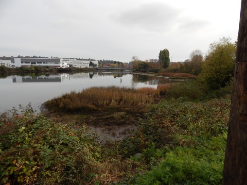 Duwamish River from Turning Basin #3