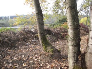 Cleared area behind US Postal Ctr on Duwamish