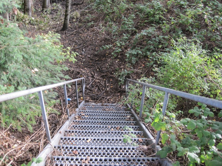 Stairs in the forest