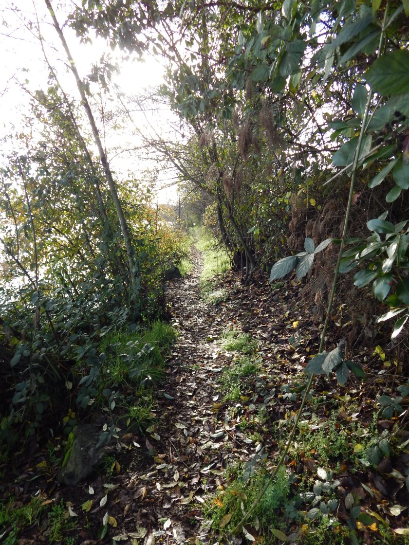 Trail on the Duwamish River bank behind substation