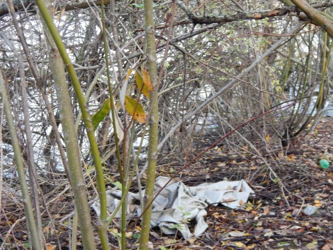 Junk left behind on Duwamish by partiers and homeless