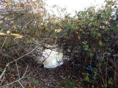 Trash in the river brush