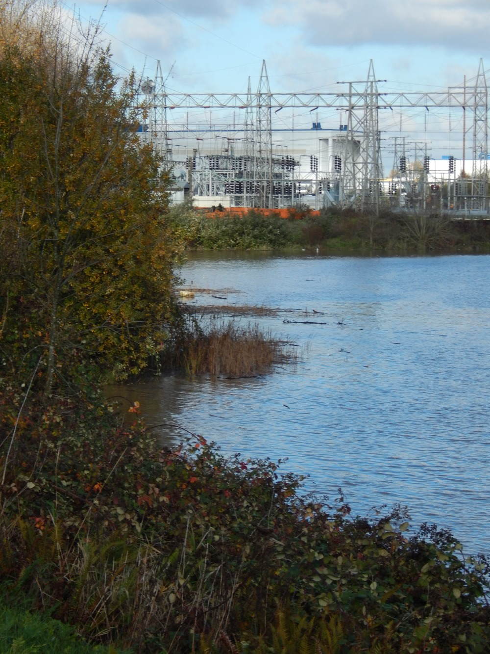 Electrified on the Duwamish River