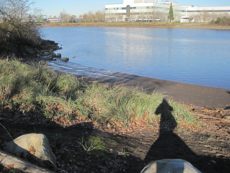 My shadow and the beach at Duwamish Waterway Park