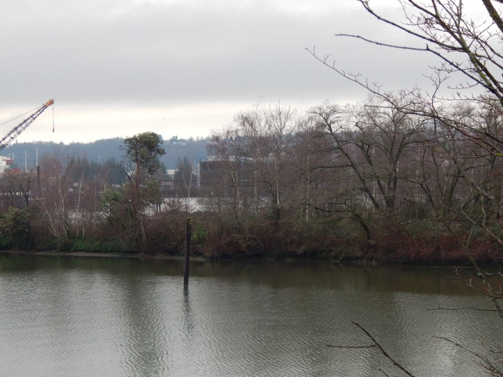 Shoreline of Island in Duwamish River