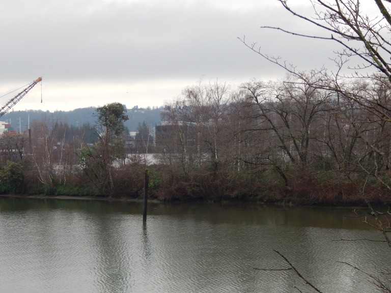 Shoreline of Island in Duwamish River