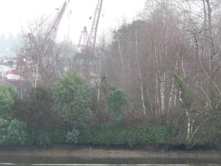 Cranes and mist over Kellogg Island