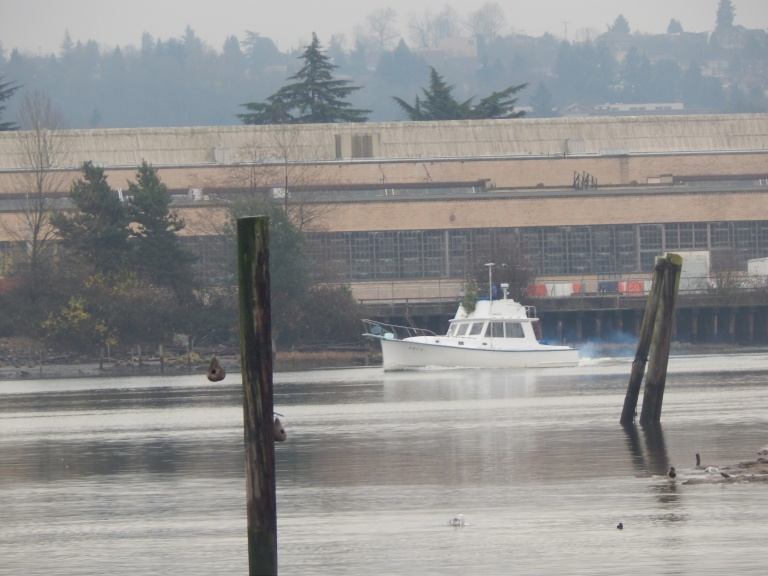 Cabin Cruiser on Duwamish