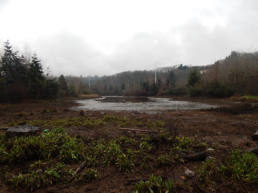 Reclaimed Marsh on Duwamish