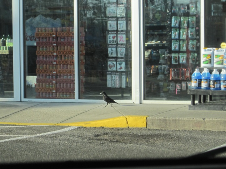 Even Crows shop at Mini Market Gas Stations