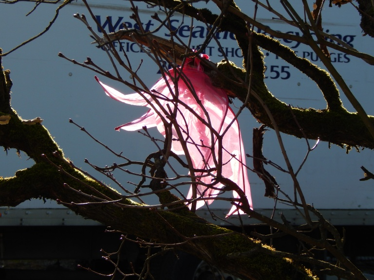 Fairy wings caught in tree