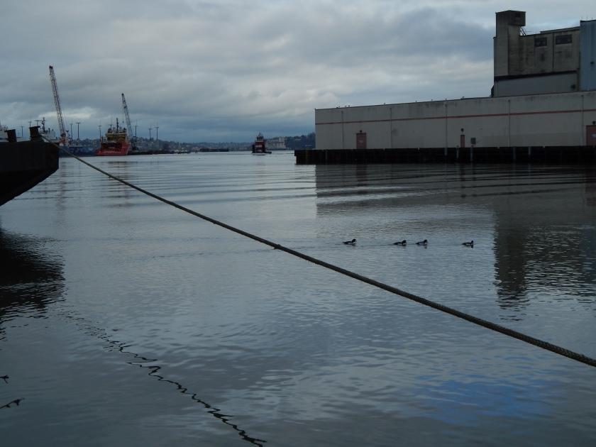 Tug in distance behind ducks on waterway