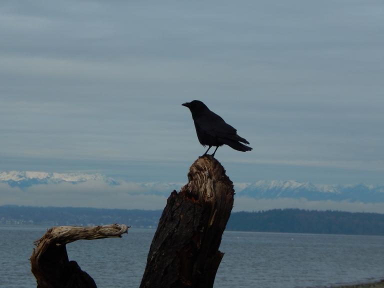 Olympics & Crow