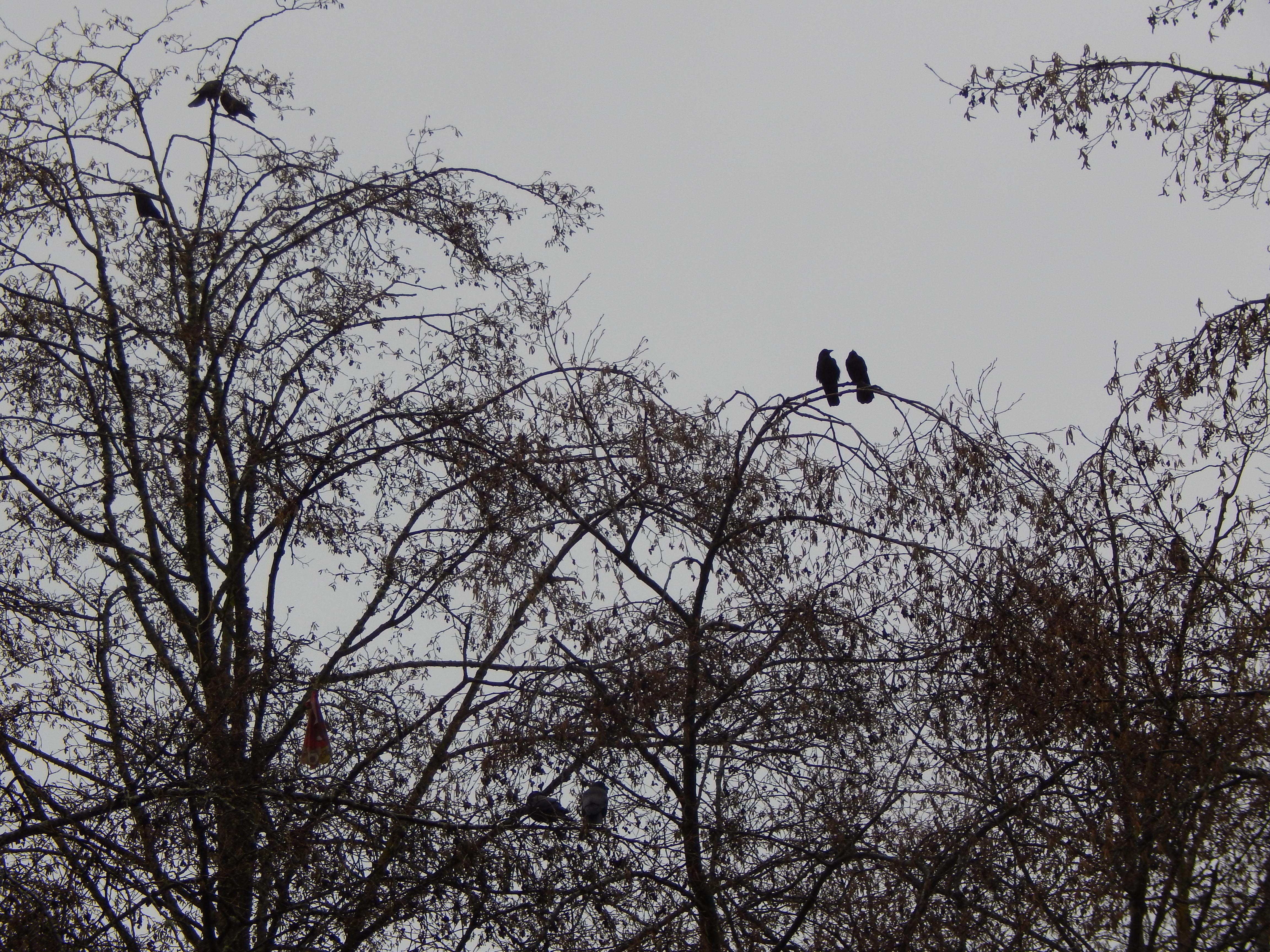 Triplet of Crow Pairs