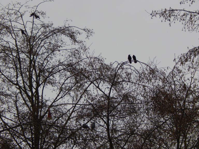 Triplet of Crow Pairs