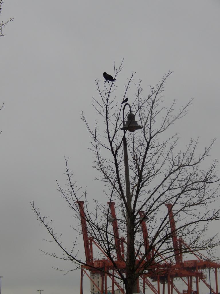 Cranes and Crows