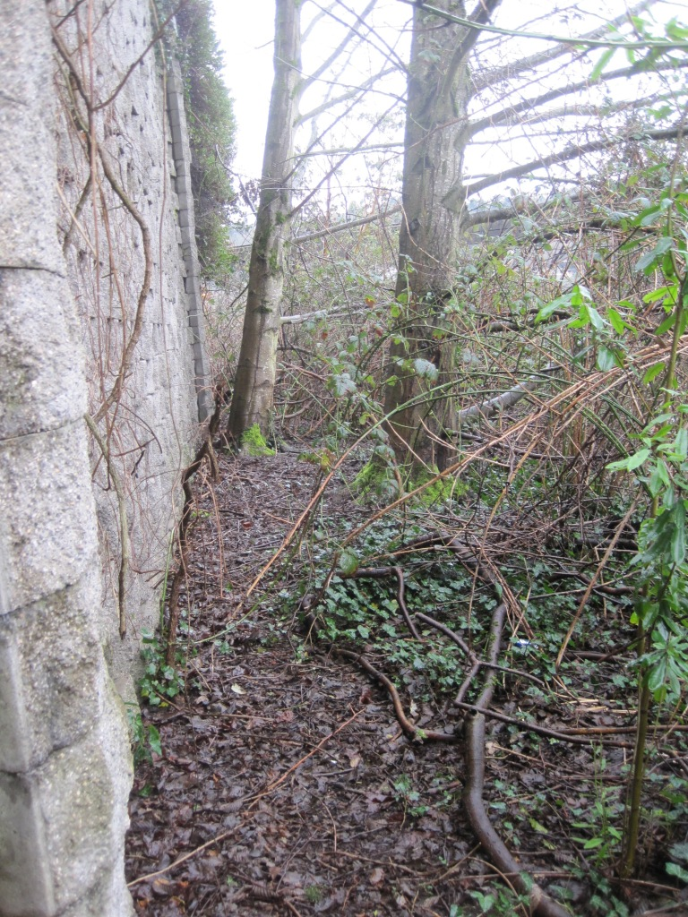 Wiggling down the wall behind brush