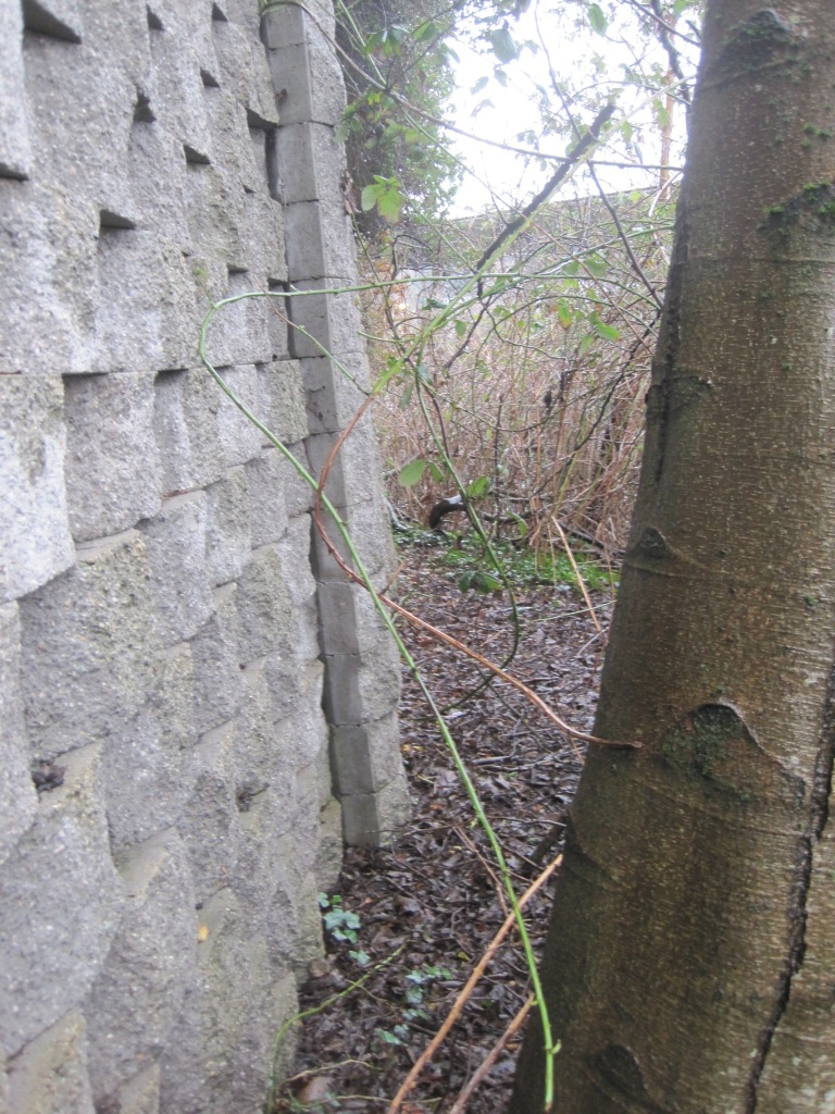 At the concrete wall corner off trail