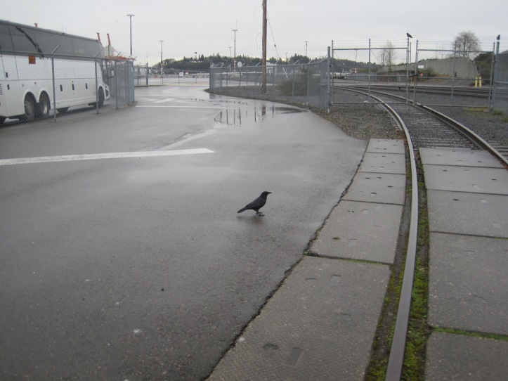 Crow by old Rail at Jack Block Park