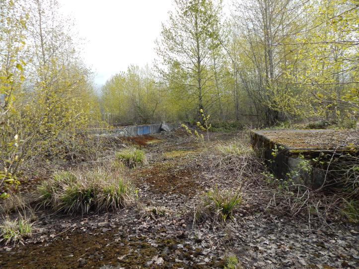 Ruins of Longacres foundation - perhaps between North grandstand & gazebo addition
