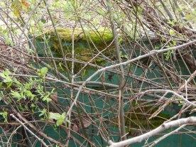 Moss on Green Wall - Longacres Racetrack