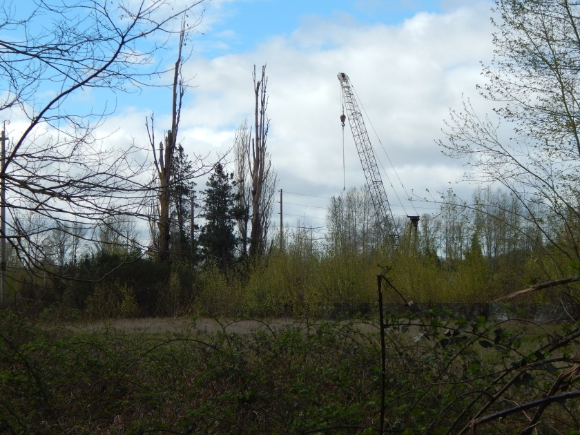 Old Poplars, crane and wall at south end of Longacres Racetrack ruins