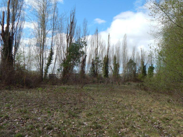 Poplars still line the curve of Longacres Track deserted
