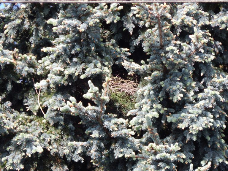 Crow Nest - is it a decoy?