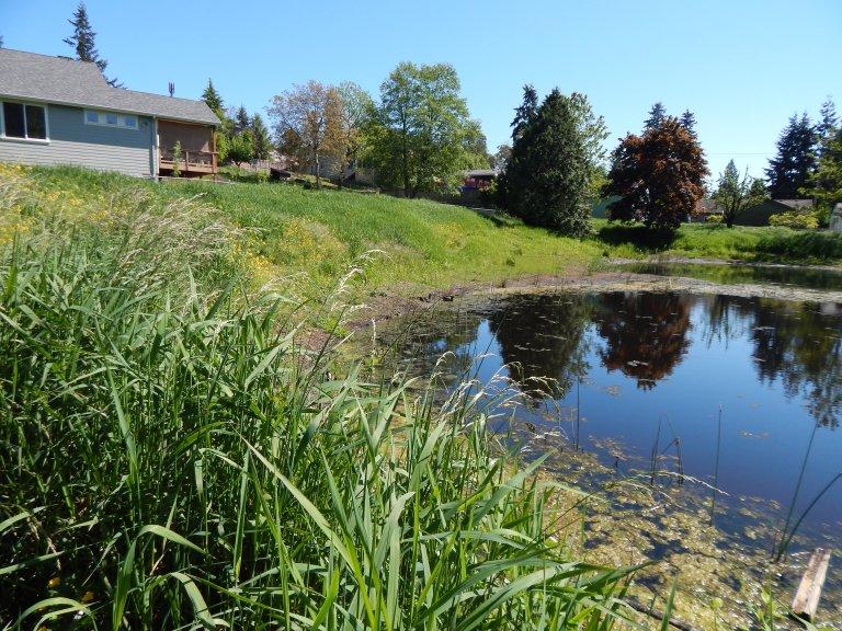 Pond - see ducks on shore