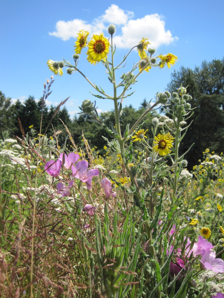 Wild Flowers & Blue Sky = First Day of Summer