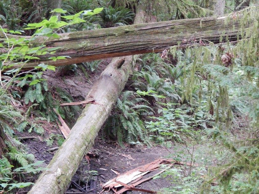 Big log over the creek ravine