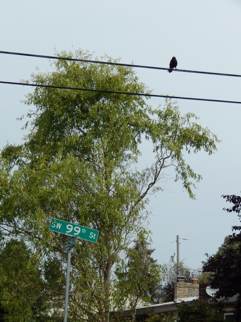 99th has crows!
