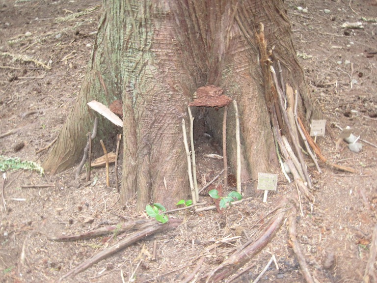 Cedar tree shelters a fairy home.
