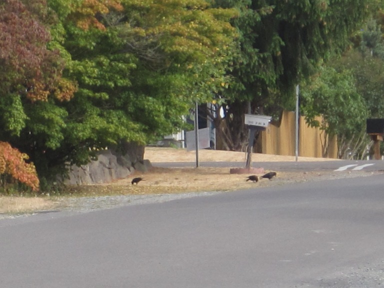 Crow family at 104th & 39th SW