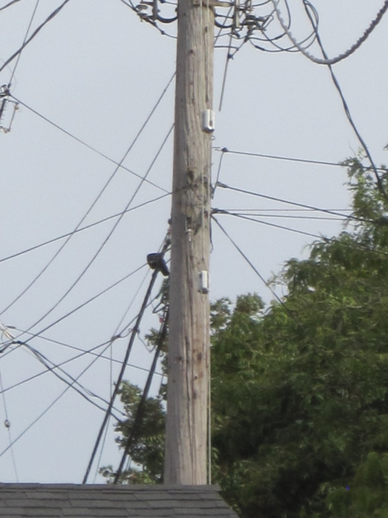 Looking down alley and crow on wire