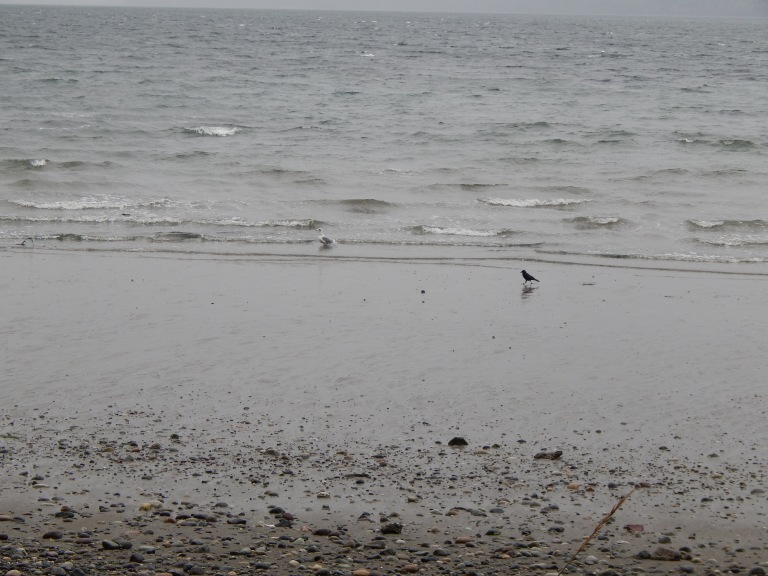 Otters gone but gull and crow seek scraps