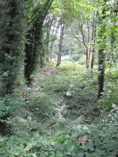 Westcrest Park Homeless ravine