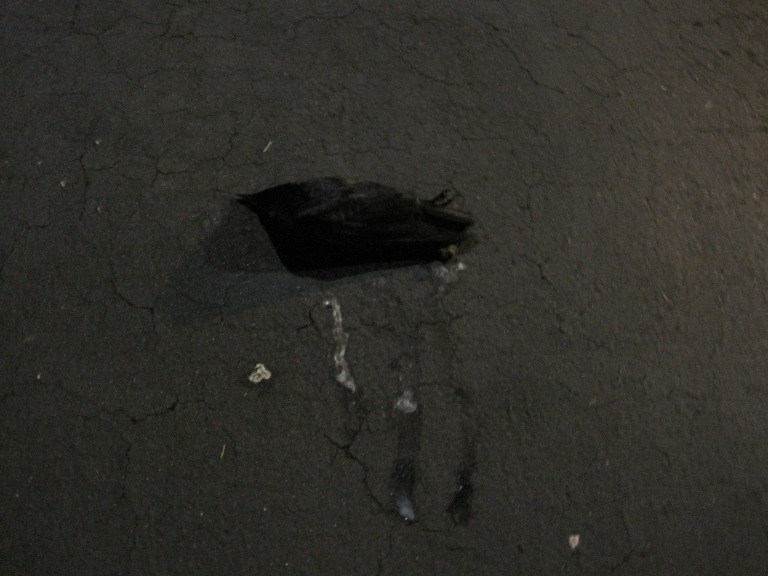 Sad no matter how you look at crows