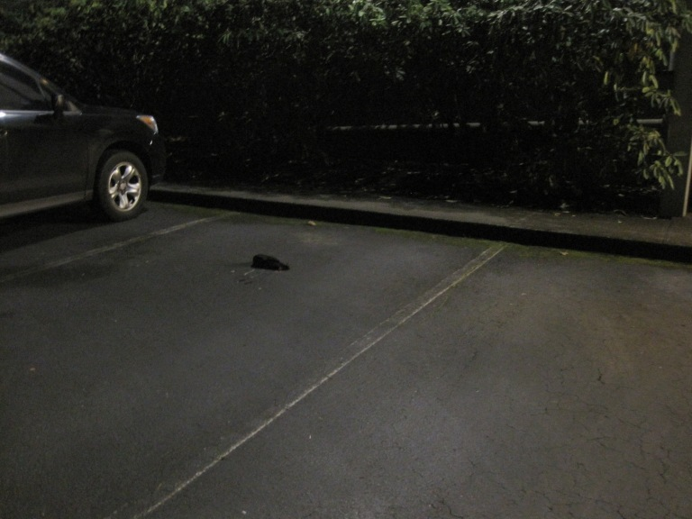 Blunt trauma killed this crow