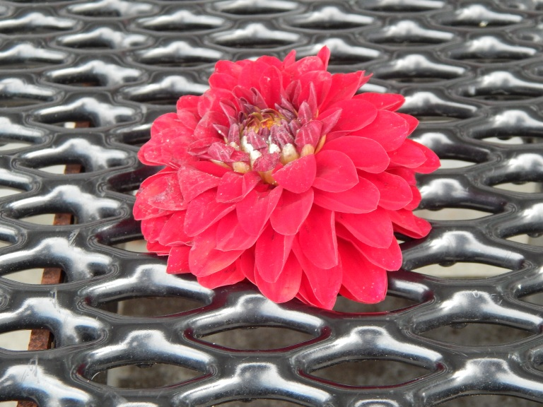 Dazzling Red Flower on metal
