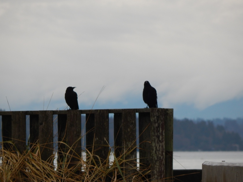 Crows watching Eagle