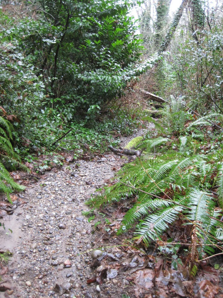 Creek bed or trail?
