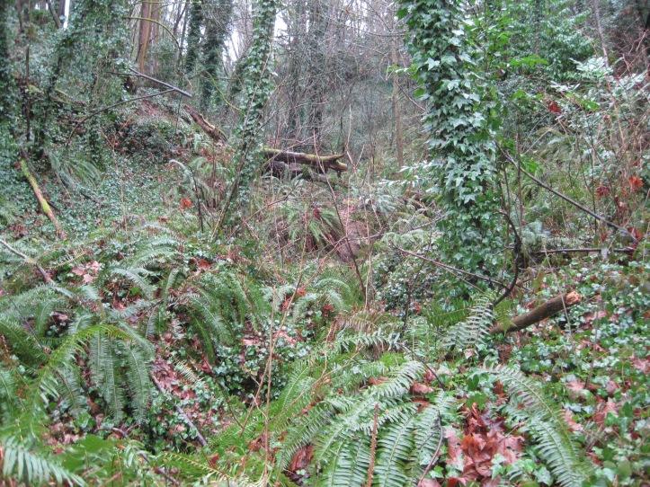 Seattle rainforest