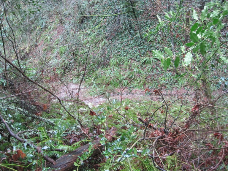 Clearing looks so small on the ravine floor below