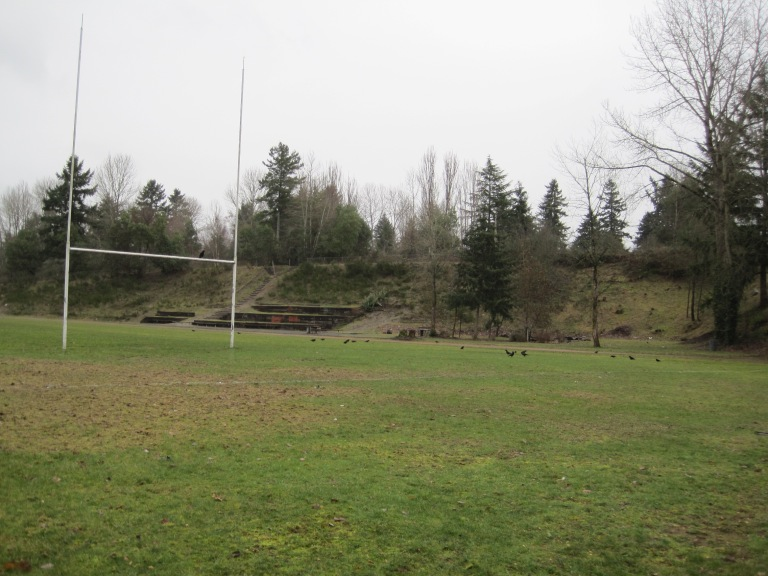 Crows on Rugby Field