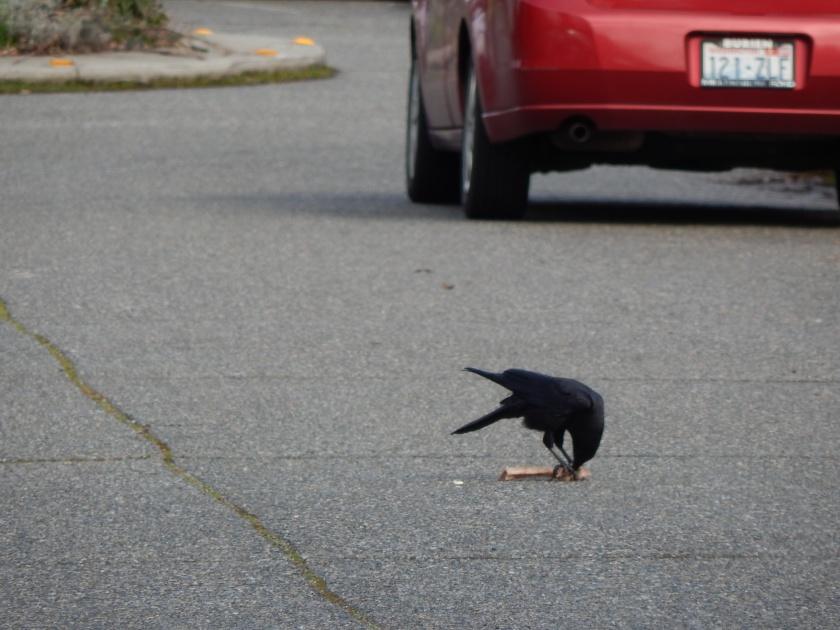 Two feet into a crow bone