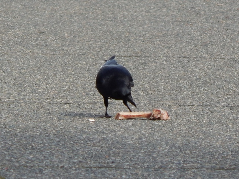 The look of Crow Bone Love